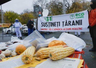 Țăranii protestează în fața Guvernului